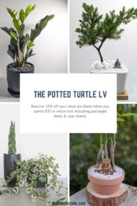 The Potted Turtle holiday gifts