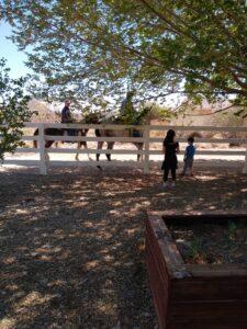 horse riders in las vegas